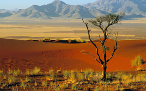 Medium_namibia